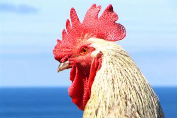 articles - sea cocks