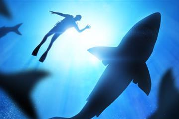 articles - shark attack