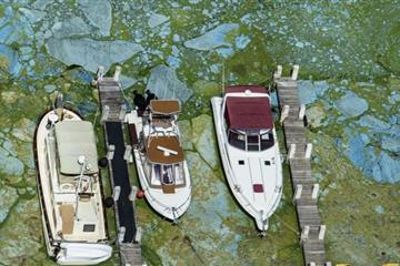 Florida toxic algal bloom causes state of emergency